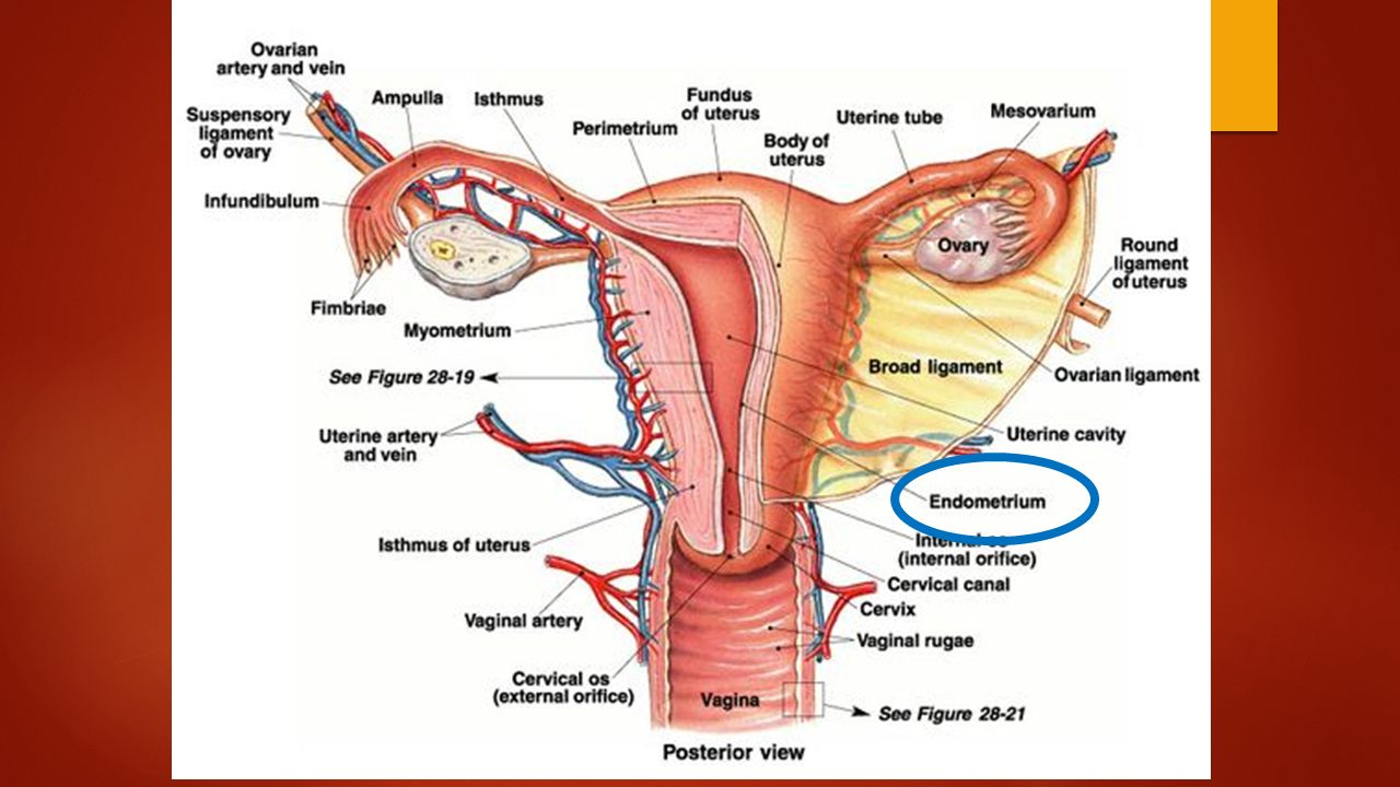an analysis of the problems of the female reproductive system