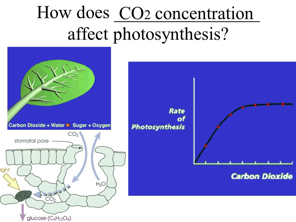 3 factors that affect the rate of photosynthesis Photosynthesis - exercise 6 know how three factors affect capillary action: effect of light intensity on the rate of photosynthesis.