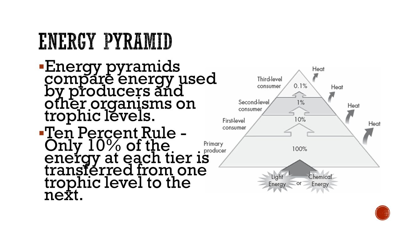 energy pyramid This pyramid shows the order in which these things ate one another the banana was the producer, so it got its energy from the sun it had 100 kilocalories to start.