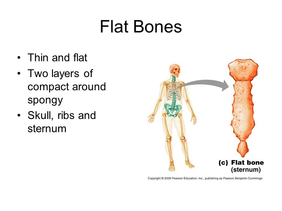 Famoso Anatomy And Physiology Chapter 5 Test Answers Imagen ...