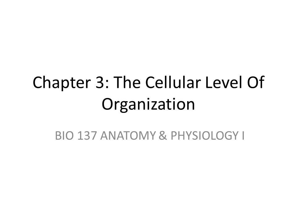 Chapter 3: The Cellular Level Of Organization BIO 137 ANATOMY ...