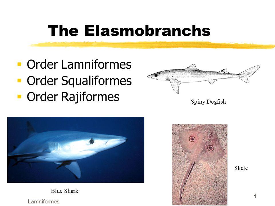 lamniformes the elasmobranchs  order lamniformes  order  1 lamniformes 1 the elasmobranchs  order lamniformes  order squaliformes  order rajiformes spiny dogfish blue shark skate