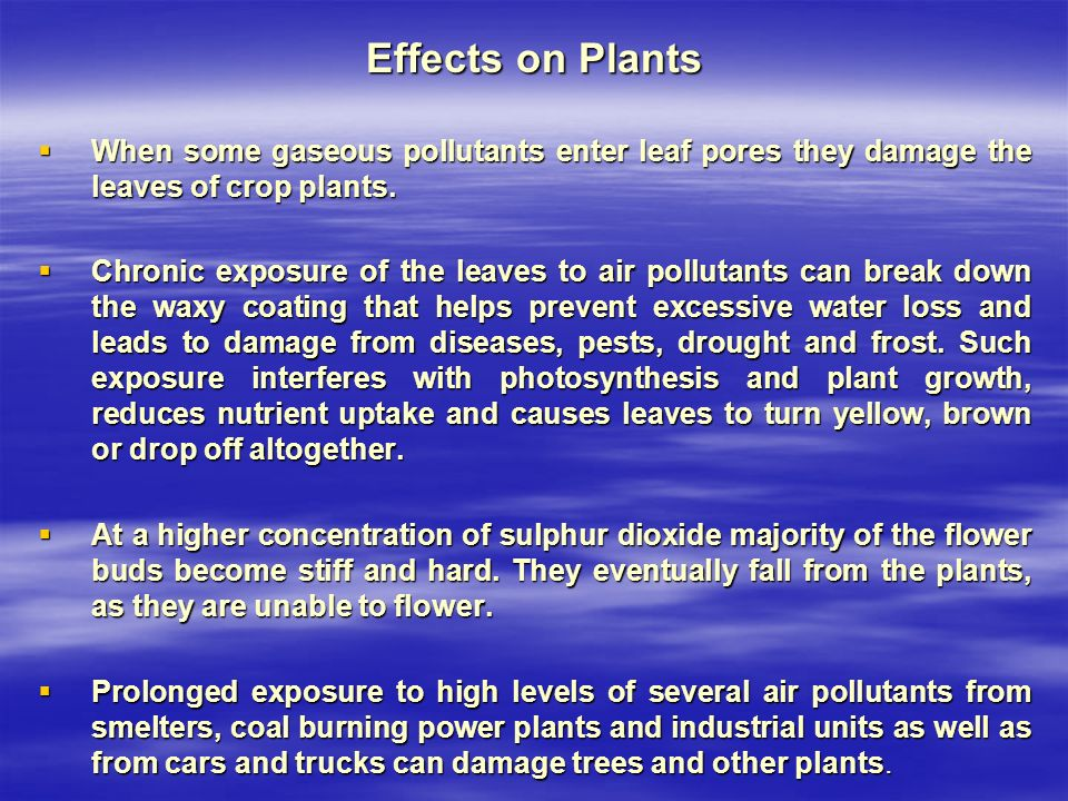Effects on Plants  When some gaseous pollutants enter leaf pores they damage the leaves of crop plants.