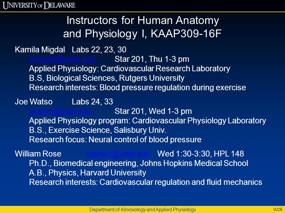 Department of Kinesiology and Applied Physiology WCR Human Anatomy ...