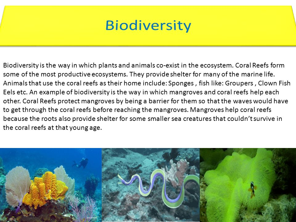 Biodiversity is the way in which plants and animals co-exist in ...