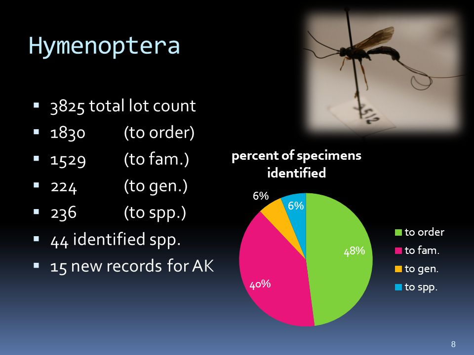 Hymenoptera 3825 total lot count 1830(to order) 1529(to fam.) 224(to gen.) 236(to spp.) 44 identified spp.