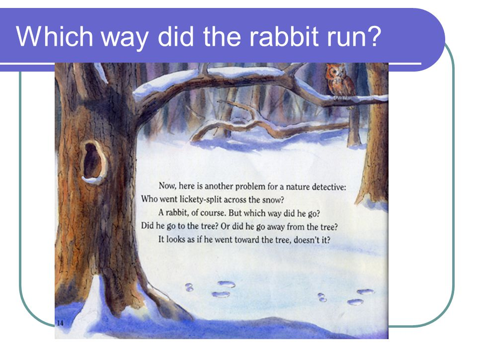 Which way did the rabbit run?