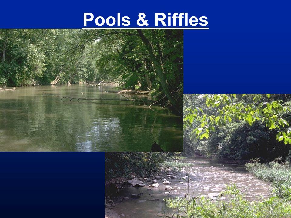 Pools & Riffles