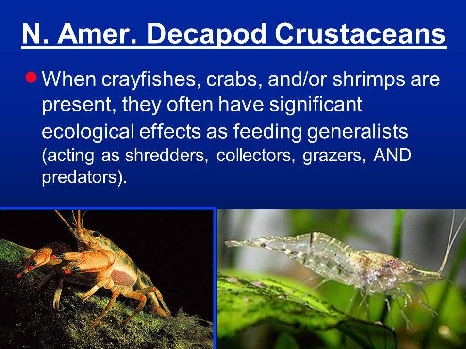 N. Amer. Decapod Crustaceans When crayfishes, crabs, and/or shrimps are present, they often have significant ecological effects as feeding generalists