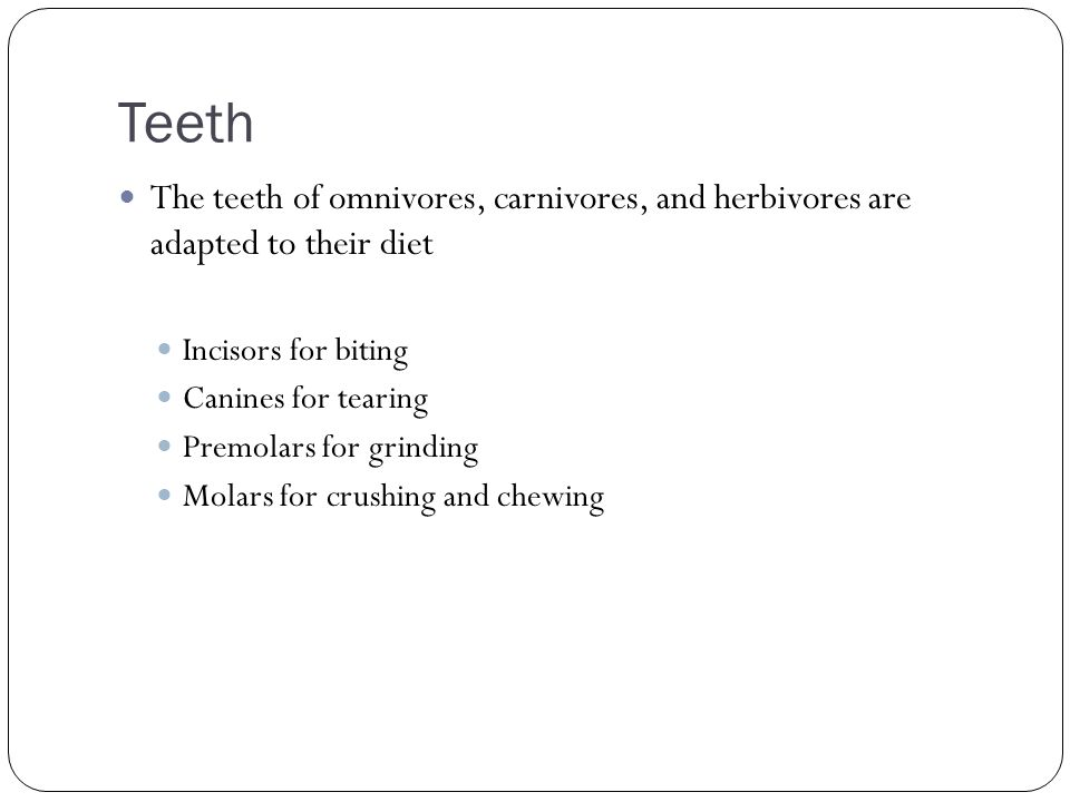 Teeth The teeth of omnivores, carnivores, and herbivores are adapted to their diet Incisors for biting Canines for tearing Premolars for grinding Mola