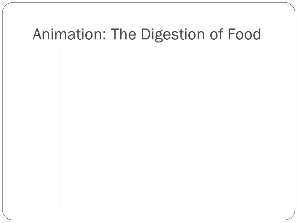 Animation: The Digestion of Food