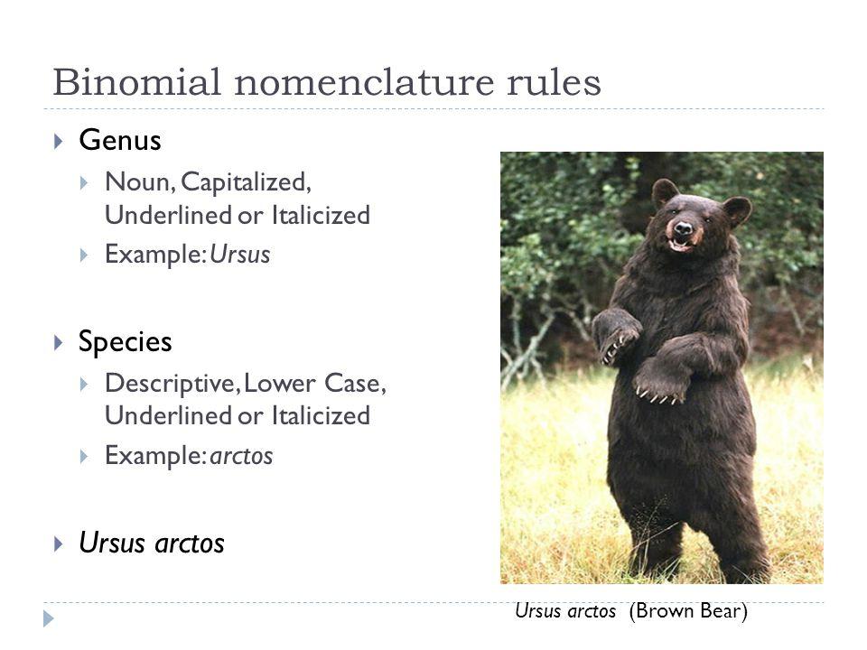 Binomial nomenclature rules Genus Noun, Capitalized, Underlined or Italicized Example: Ursus Species Descriptive, Lower Case, Underlined or Italicized