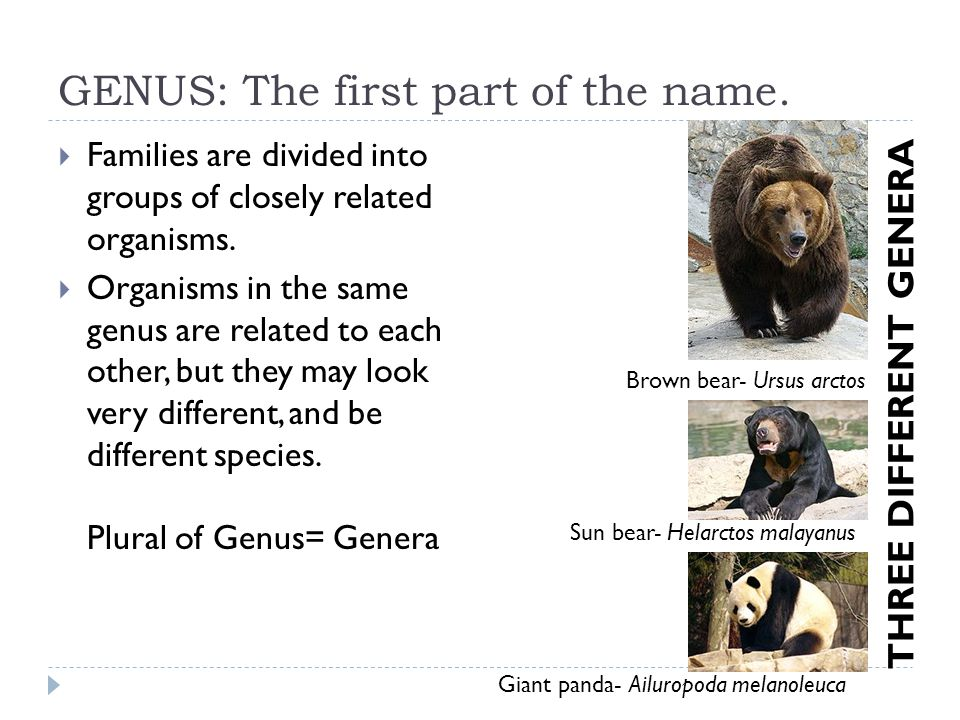GENUS: The first part of the name. Families are divided into groups of closely related organisms. Organisms in the same genus are related to each othe