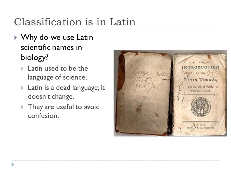 Classification is in Latin Why do we use Latin scientific names in biology? Latin used to be the language of science. Latin is a dead language; it doe