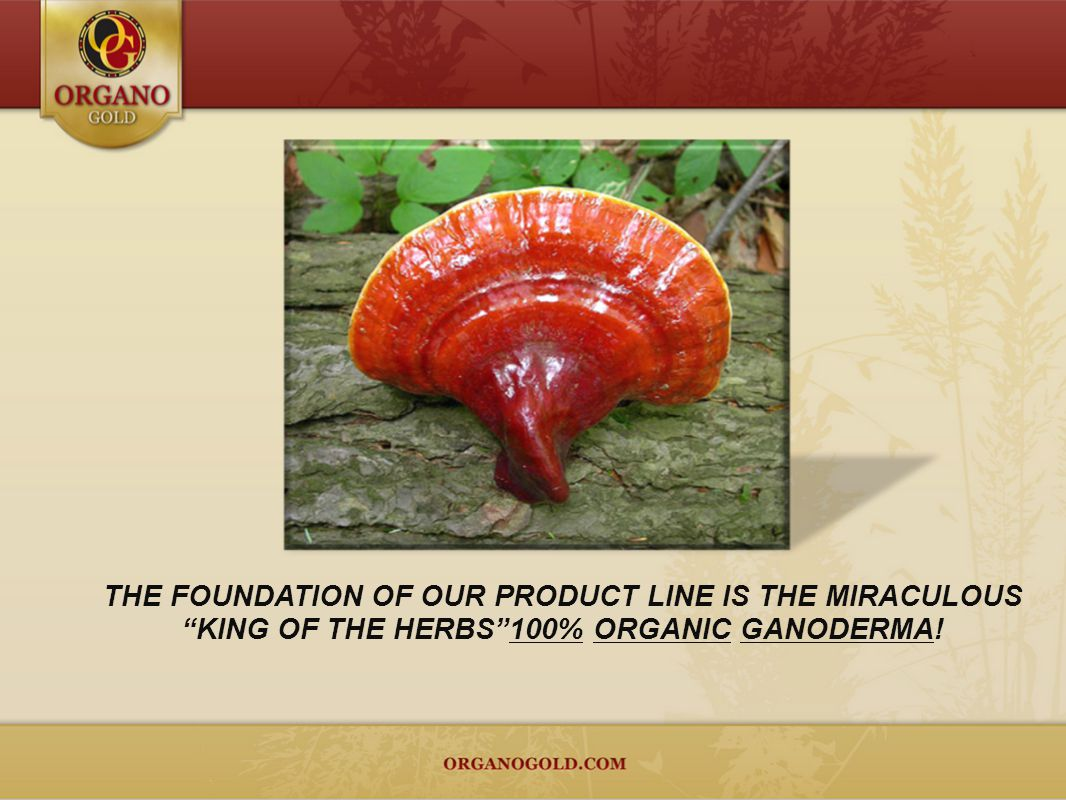 THE FOUNDATION OF OUR PRODUCT LINE IS THE MIRACULOUS KING OF THE HERBS100% ORGANIC GANODERMA!