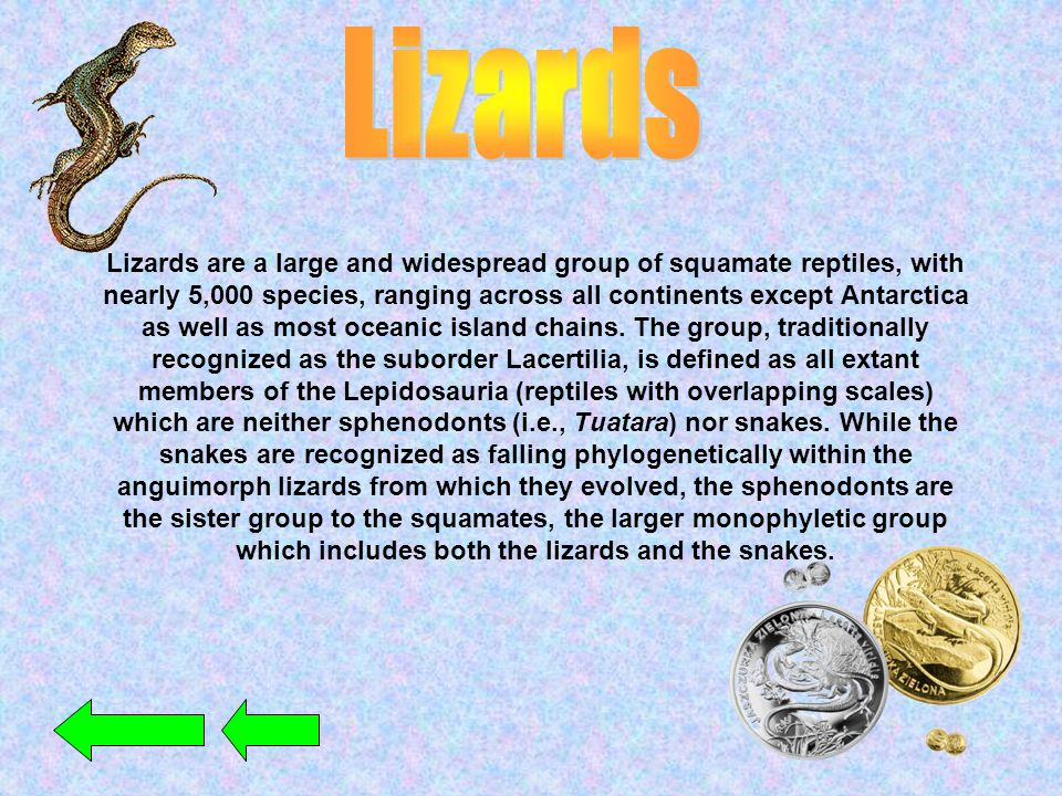 Lizards are a large and widespread group of squamate reptiles, with nearly 5,000 species, ranging across all continents except Antarctica as well as m