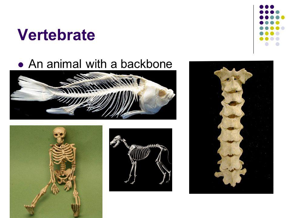 Invertebrate Does NOT have a backbone