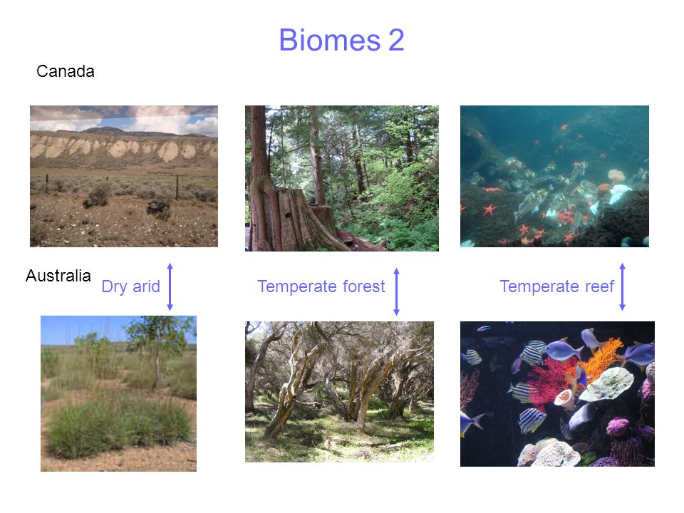 Types of ecosystem Natural – relatively unaffected by humans eg forest, reserves, parks Agricultural – farming ecosystems Urban – human ecosystems eg towns and cities Aquatic – ecosystems in water eg rivers, seas Terrestrial –ecosystems found on land eg forests, deserts