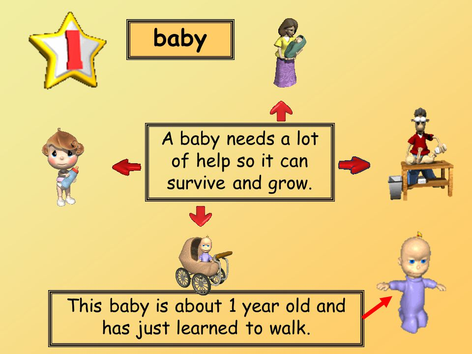 baby This baby is about 1 year old and has just learned to walk. A baby needs a lot of help so it can survive and grow.