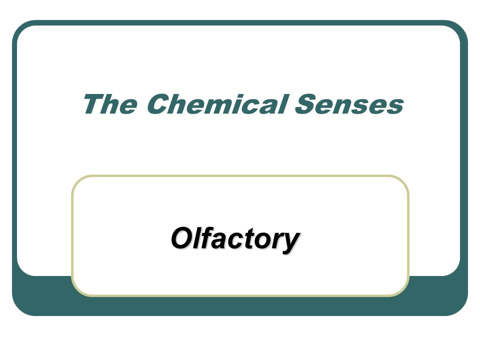 The Chemical Senses Olfactory