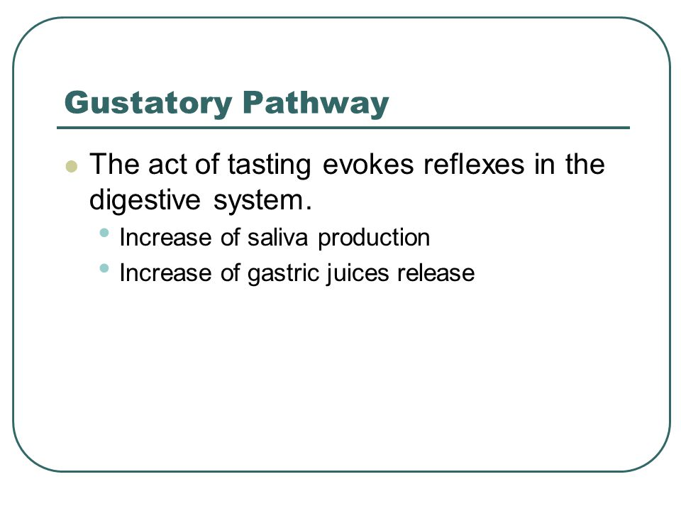 Gustatory Pathway The act of tasting evokes reflexes in the digestive system. Increase of saliva production Increase of gastric juices release