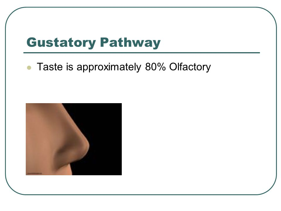 Gustatory Pathway Taste is approximately 80% Olfactory