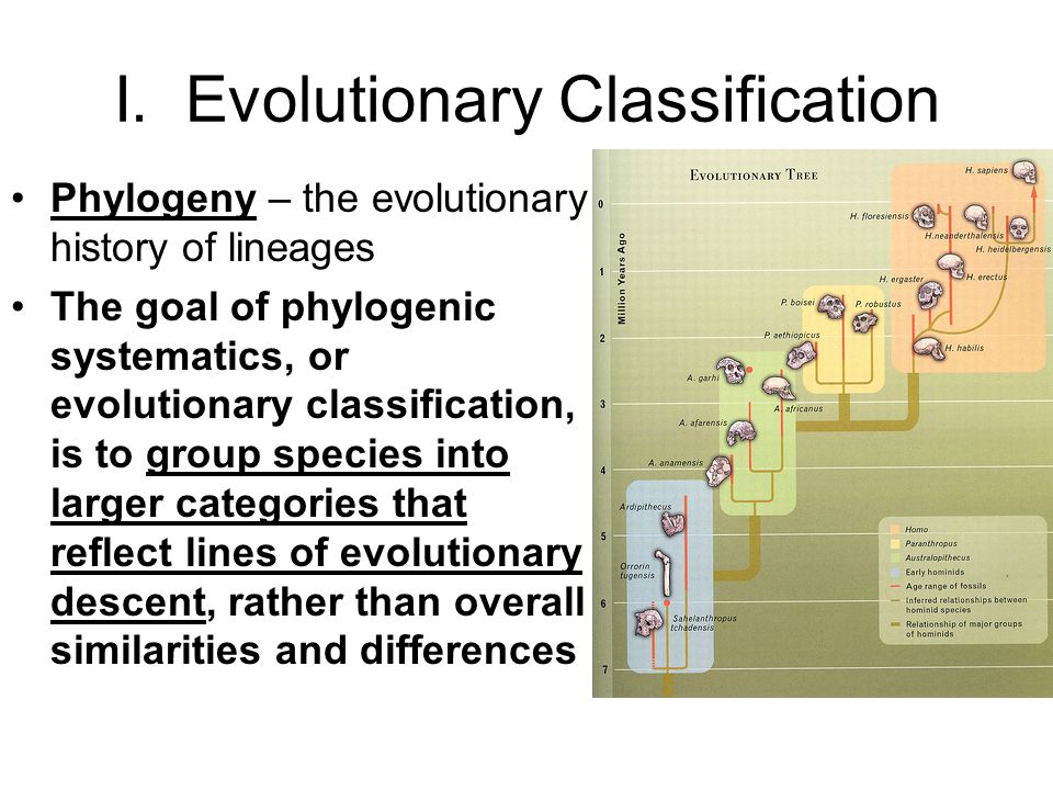 I. Evolutionary Classification Phylogeny – the evolutionary history of lineages The goal of phylogenic systematics, or evolutionary classification, is