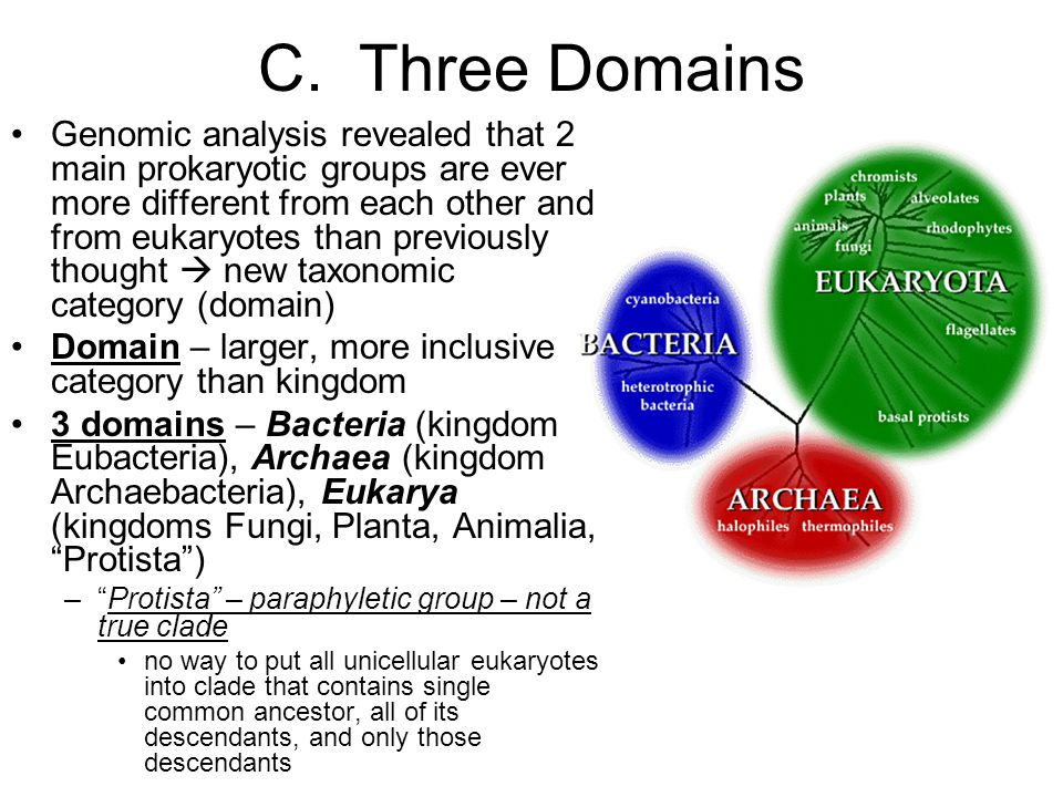 C. Three Domains Genomic analysis revealed that 2 main prokaryotic groups are ever more different from each other and from eukaryotes than previously