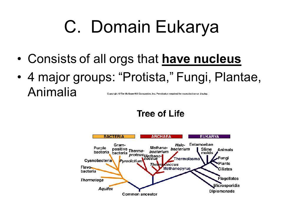 C. Domain Eukarya Consists of all orgs that have nucleus 4 major groups: Protista, Fungi, Plantae, Animalia