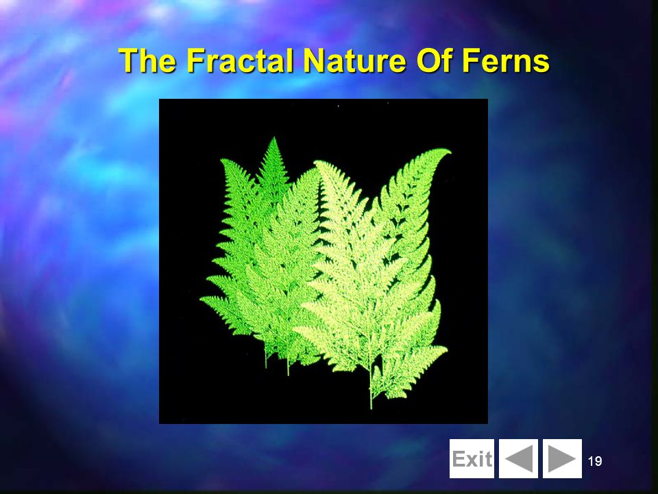 19 The Fractal Nature Of Ferns Exit
