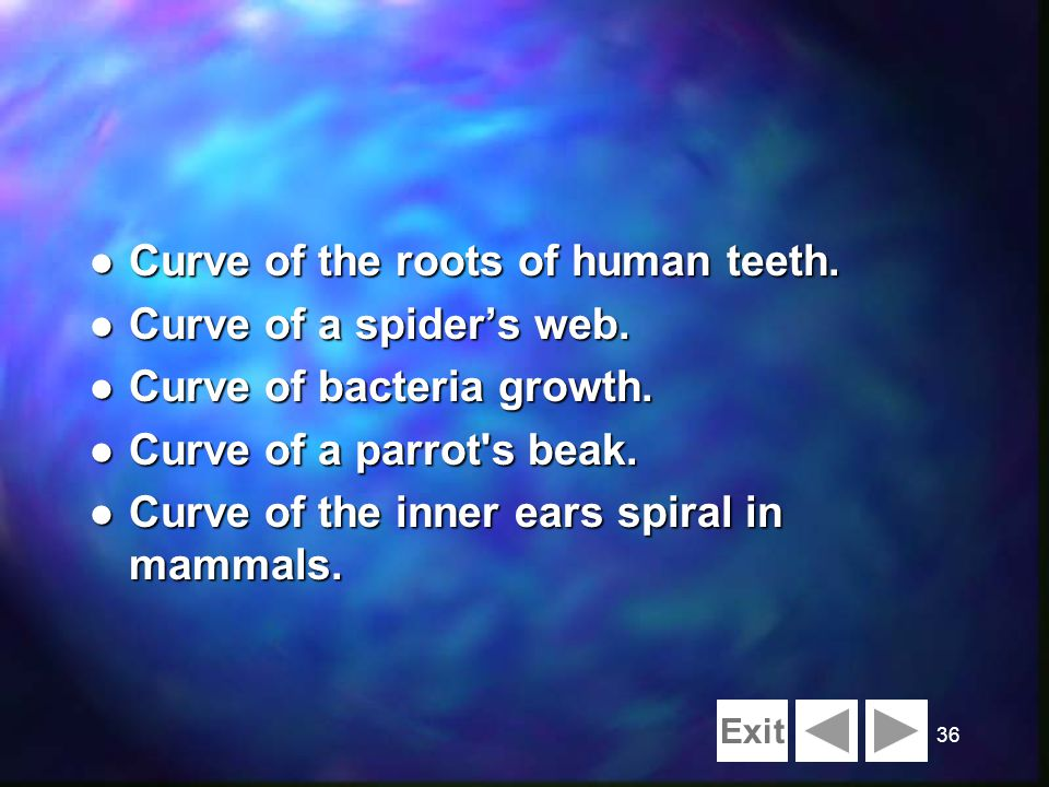 36 l Curve of the roots of human teeth. l Curve of a spiders web. l Curve of bacteria growth. l Curve of a parrot's beak. l Curve of the inner ears sp