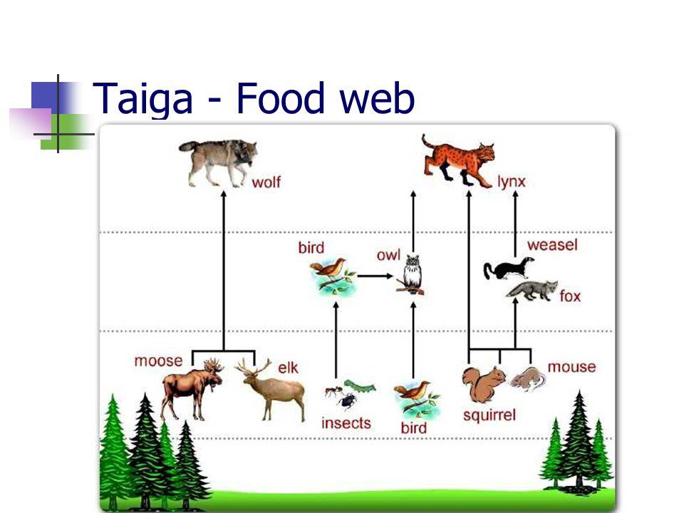 Taiga - Food web