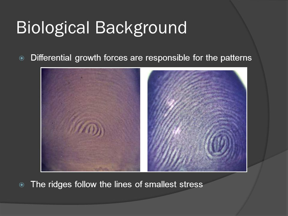 Biological Background Differential growth forces are responsible for the patterns The ridges follow the lines of smallest stress