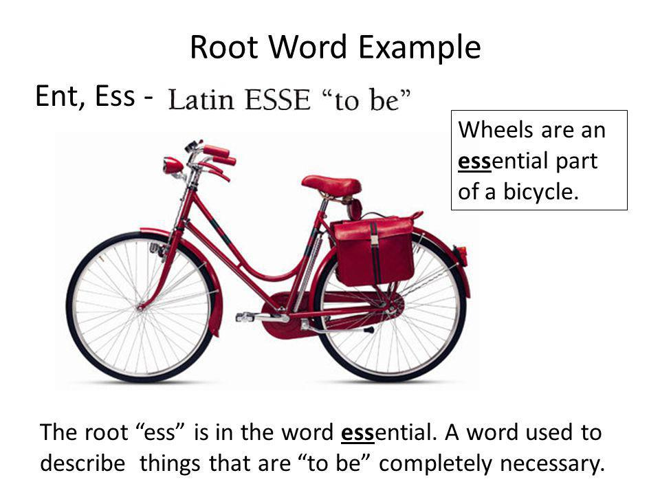 Root Word Example Ent, Ess - The root ess is in the word essential. A word used to describe things that are to be completely necessary. Wheels are an