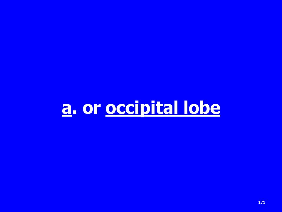 a. or occipital lobe 171