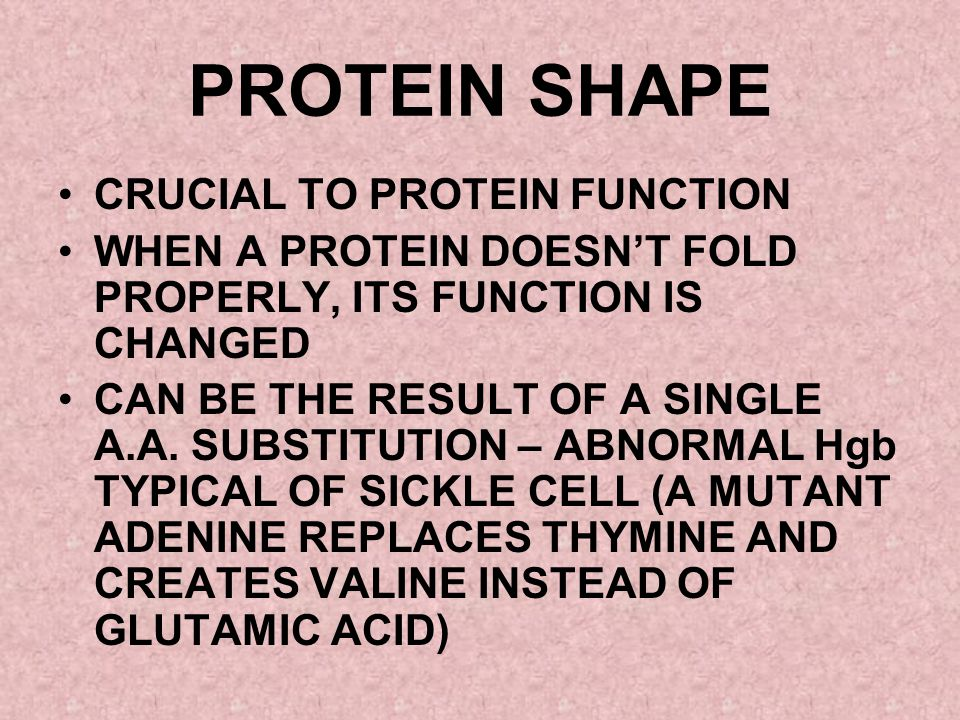 PROTEIN SHAPE CRUCIAL TO PROTEIN FUNCTION WHEN A PROTEIN DOESNT FOLD PROPERLY, ITS FUNCTION IS CHANGED CAN BE THE RESULT OF A SINGLE A.A. SUBSTITUTION