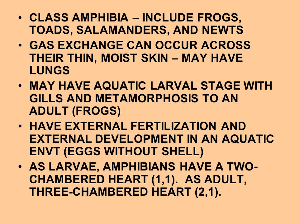 CLASS AMPHIBIA – INCLUDE FROGS, TOADS, SALAMANDERS, AND NEWTS GAS EXCHANGE CAN OCCUR ACROSS THEIR THIN, MOIST SKIN – MAY HAVE LUNGS MAY HAVE AQUATIC L