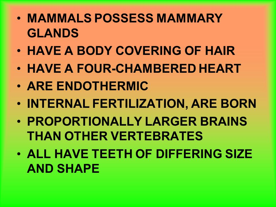 MAMMALS POSSESS MAMMARY GLANDS HAVE A BODY COVERING OF HAIR HAVE A FOUR-CHAMBERED HEART ARE ENDOTHERMIC INTERNAL FERTILIZATION, ARE BORN PROPORTIONALL