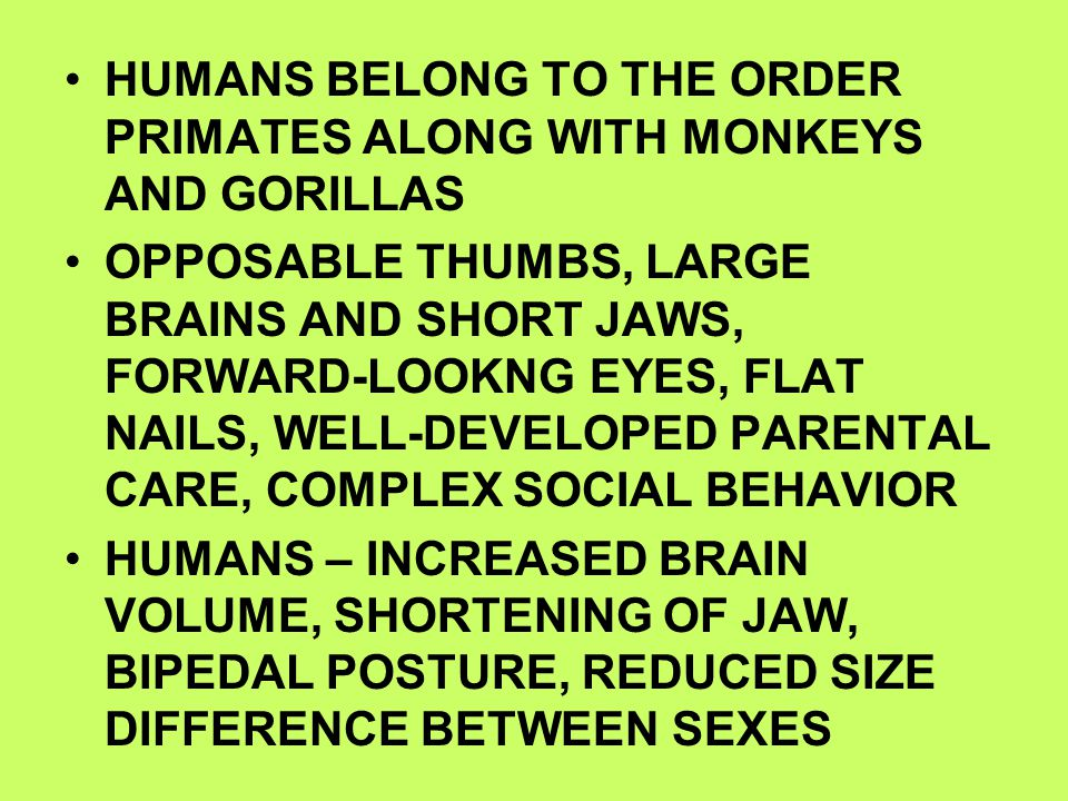 HUMANS BELONG TO THE ORDER PRIMATES ALONG WITH MONKEYS AND GORILLAS OPPOSABLE THUMBS, LARGE BRAINS AND SHORT JAWS, FORWARD-LOOKNG EYES, FLAT NAILS, WE