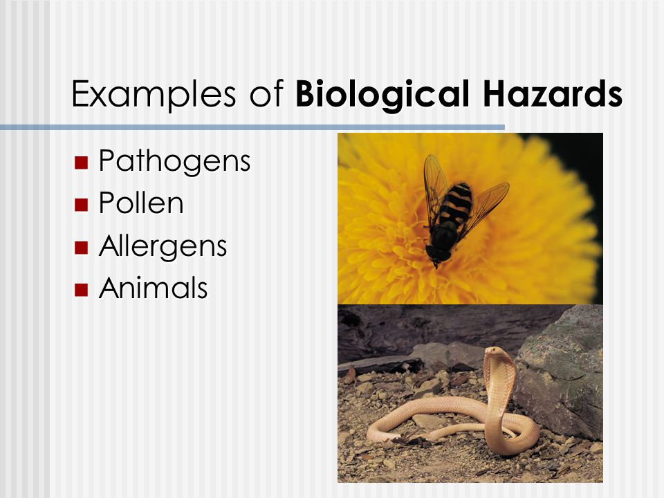 Examples of Biological Hazards Pathogens Pathogens Pollen Pollen Allergens Allergens Animals Animals