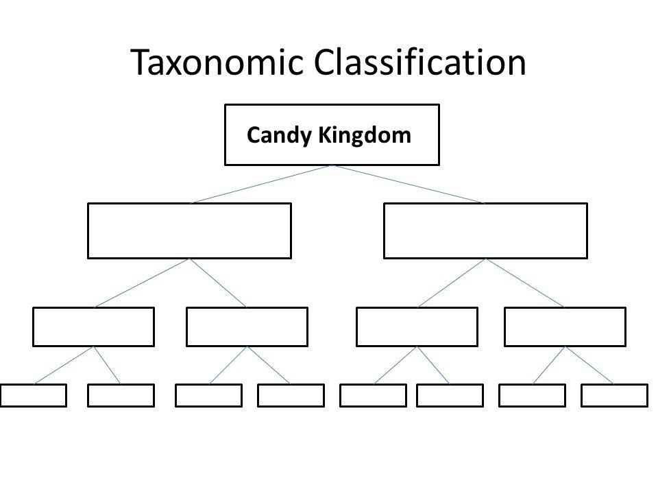 C Candy Kingdom