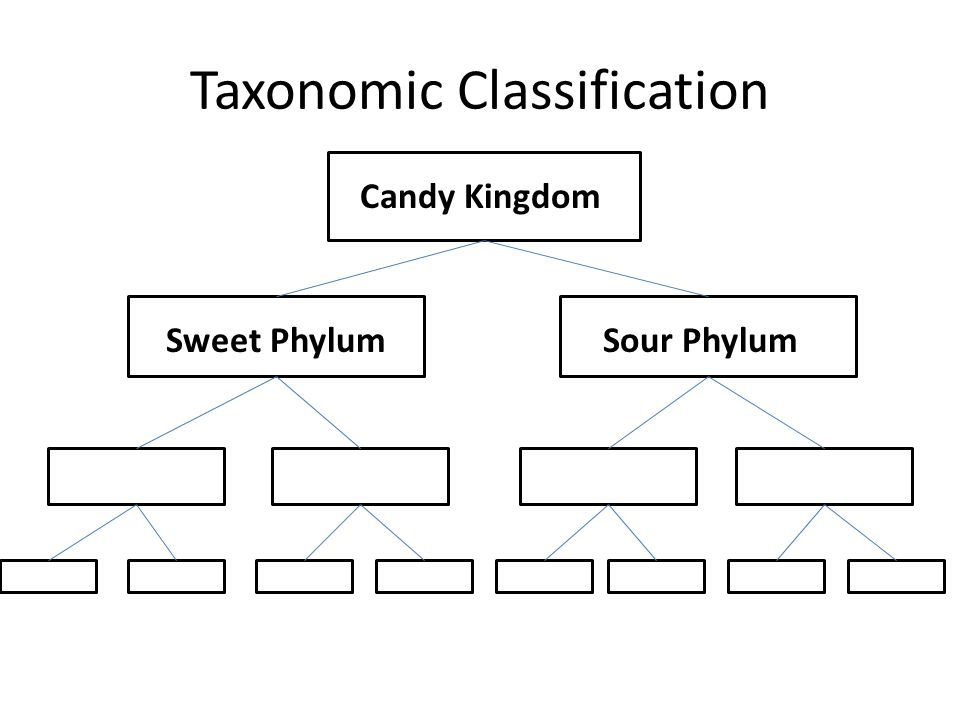 Taxonomic Classification C Candy Kingdom Sweet PhylumSour Phylum
