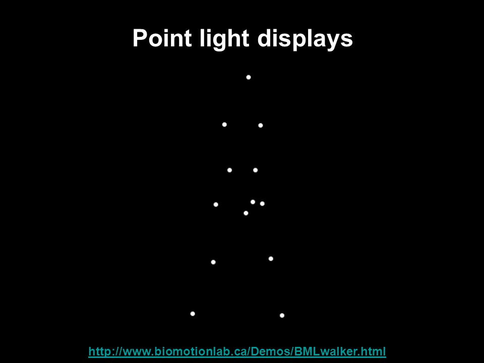 Point light displays Link: http://www.biomotionlab.ca/Demos/BMLwalker.html http://www.biomotionlab.ca/Demos/BMLwalker.html