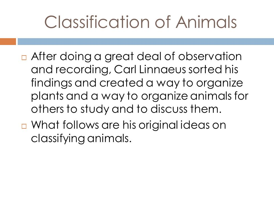 Classification of Animals After doing a great deal of observation and recording, Carl Linnaeus sorted his findings and created a way to organize plants and a way to organize animals for others to study and to discuss them.