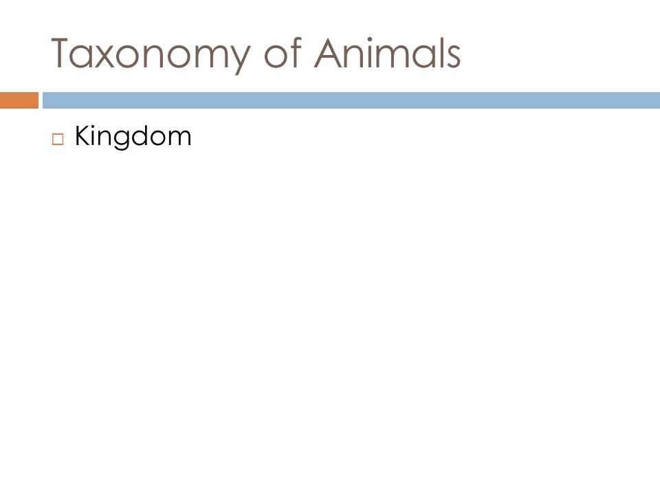 Taxonomy of Animals Kingdom