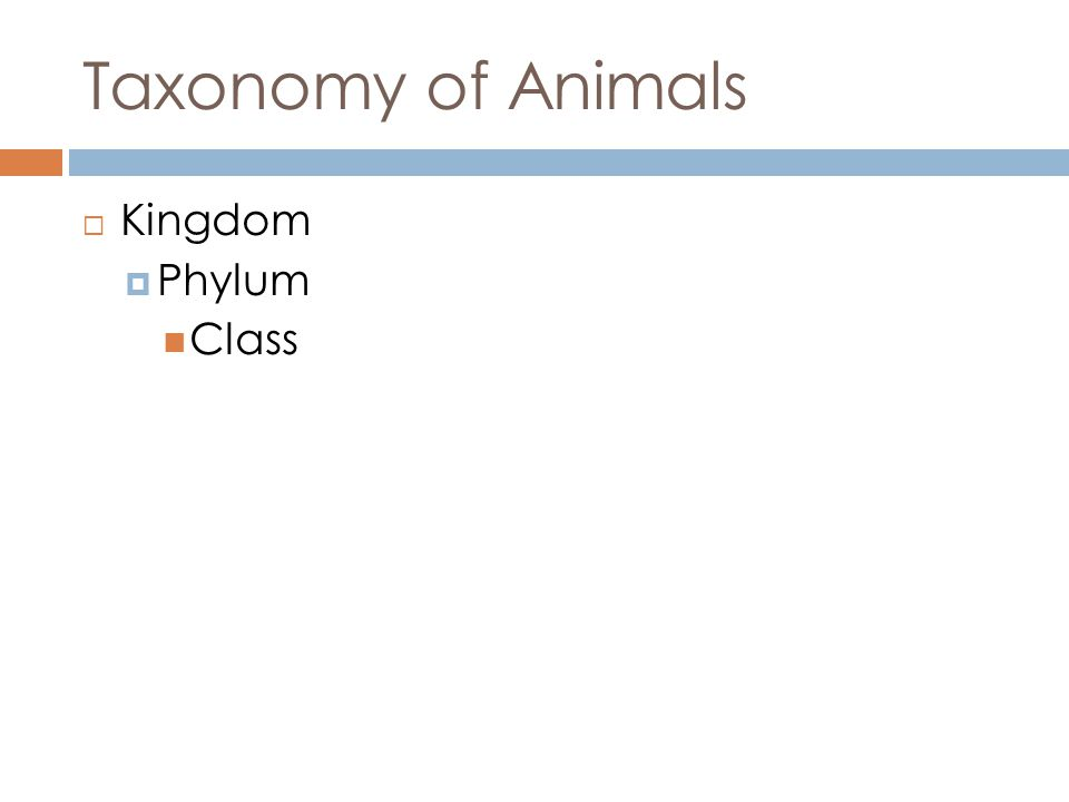 Taxonomy of Animals Kingdom Phylum Class