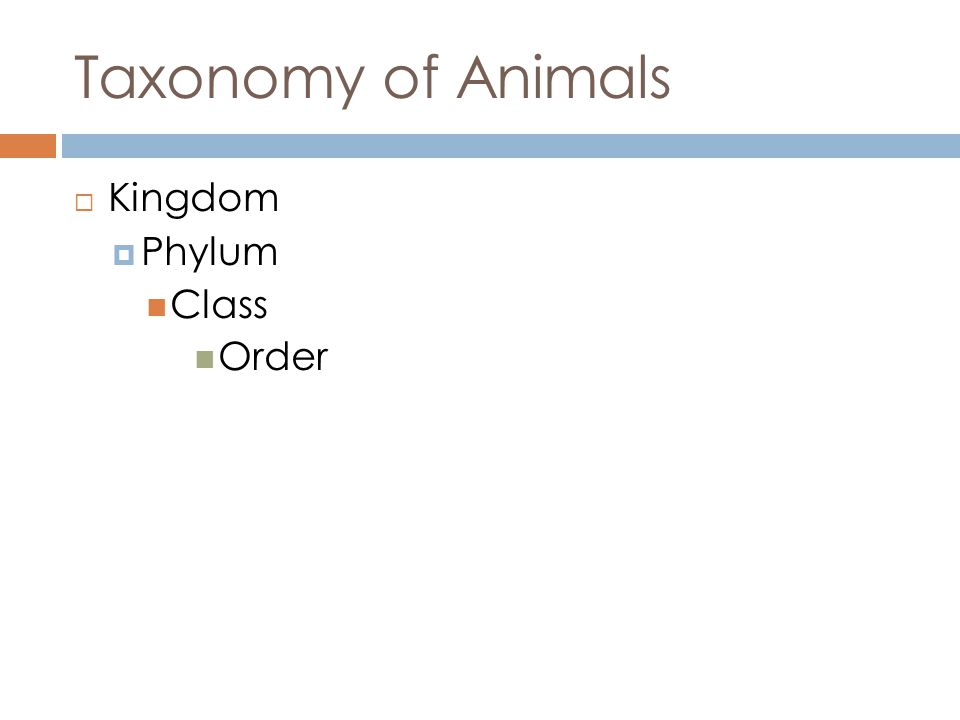 Taxonomy of Animals Kingdom Phylum Class Order