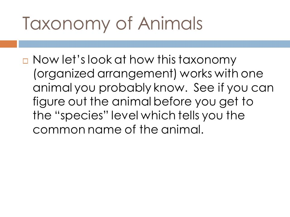 Taxonomy of Animals Now lets look at how this taxonomy (organized arrangement) works with one animal you probably know.
