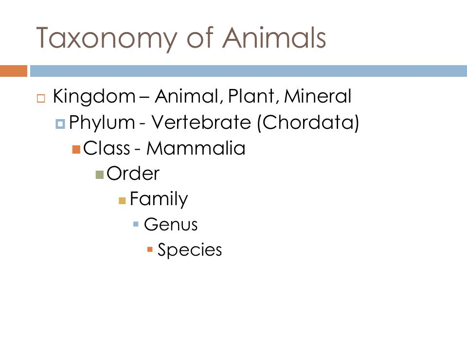 Taxonomy of Animals Kingdom – Animal, Plant, Mineral Phylum - Vertebrate (Chordata) Class - Mammalia Order Family Genus Species