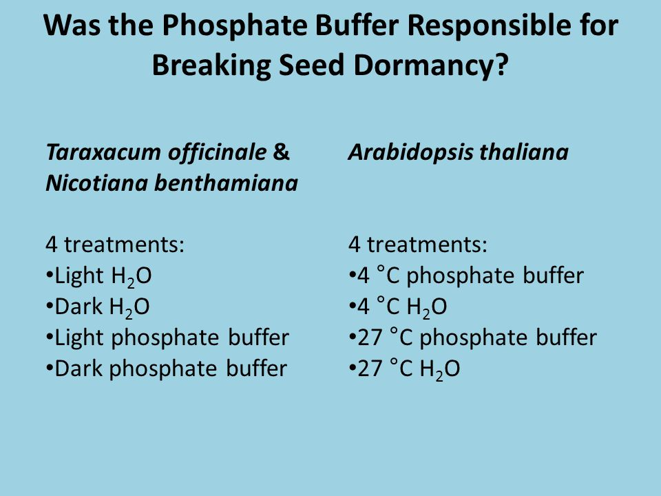 Was the Phosphate Buffer Responsible for Breaking Seed Dormancy? Taraxacum officinale & Nicotiana benthamiana 4 treatments: Light H 2 O Dark H 2 O Lig